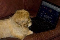 Dude on a Mac - Dude the webutante Junkie